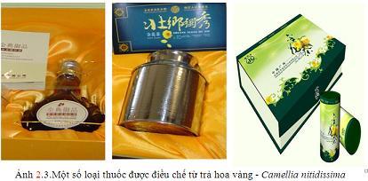 thuốc chế từ trà hoa vàng